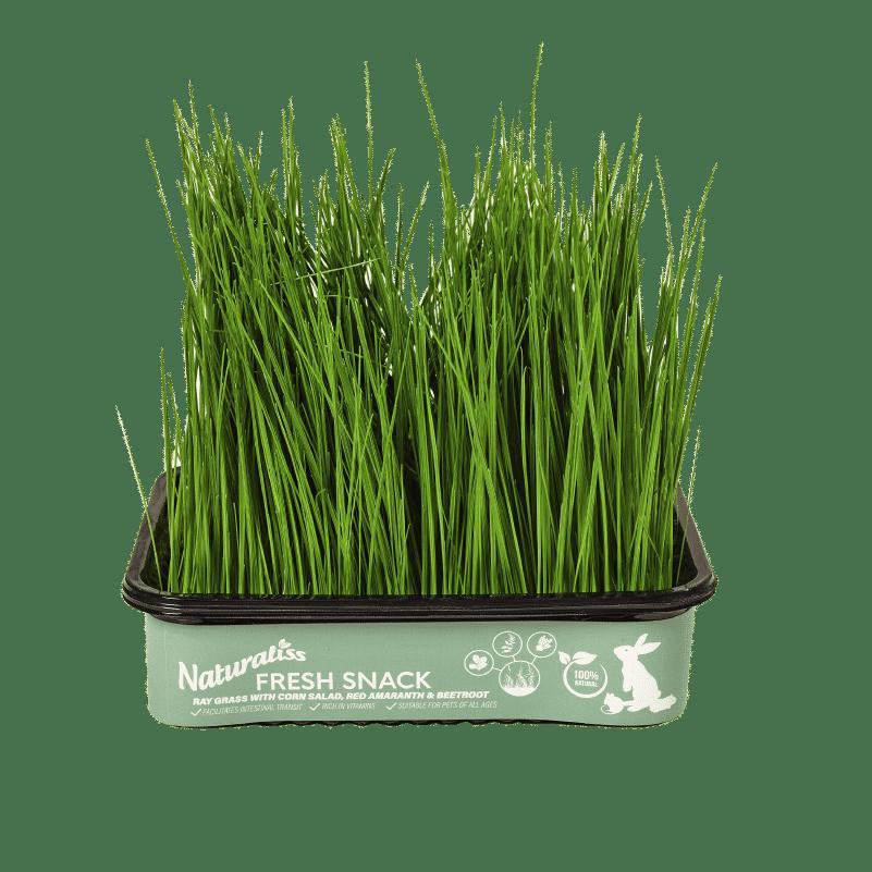 Hierba fresca Naturaliss: Raygrass más canónigos